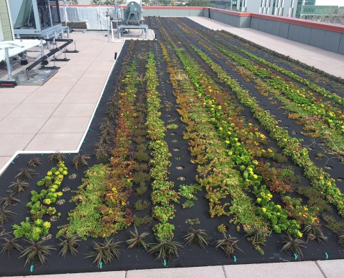green roof vegetable garden at Campus Federal Credit Union New Orleans, LA | DonahueFavret General Contractors Louisiana and Gulf South
